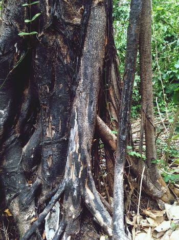 Grandmas Garden Camoapa TreeSurvivor GreenLover 🌳🌿