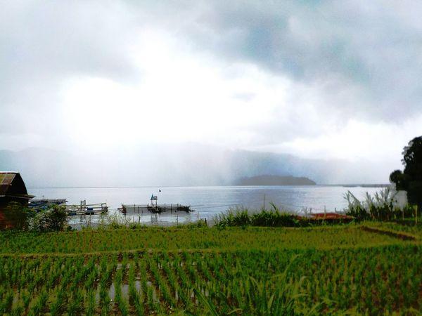 Field Rice Paddy Lake Lake View Sumatra  Sumatera Clouds And Lake Clouds And Landscape