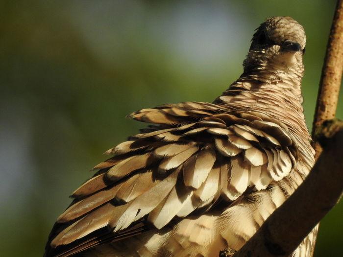 Bird Bird Of
