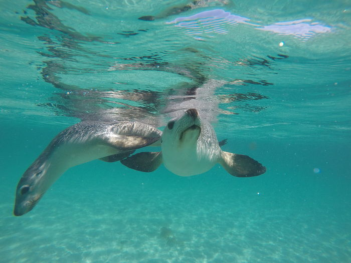 Close-Up Of Sea Lions Swimming Underwater