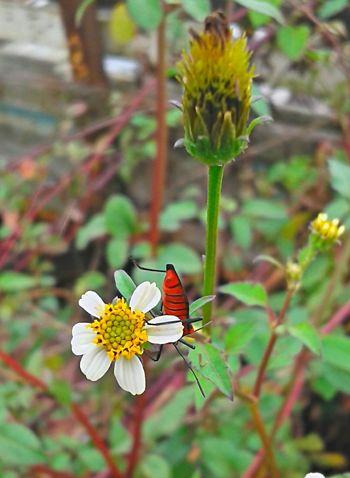 Beauty In Nature Brasil ♥ Coisa De Deus Coisa De Deus Natureza Perfeita Flower Insetosdobrasil Nature Peruíbe City
