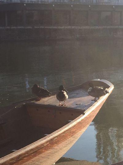 Ducks NoEditNoFilter Primavera Love Is In The Air Spring Tübingen Lovemycity Beauty Bellezza Boats Sunshine Morning Sun