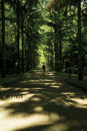 Parque Terra Nostra, Furnas Sao Miguel Parque Terra Nostra Beauty In Nature Day Direction Forest Full Length Green Color Growth Land Nature One Person Outdoors Plant Real People Rear View Shadow Sunlight The Way Forward Transportation Tree Treelined Walking WoodLand