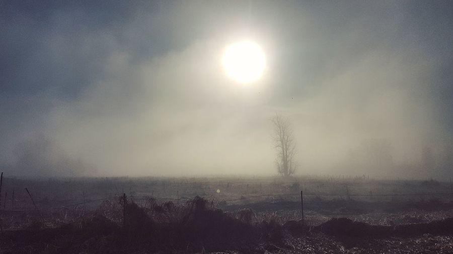 One Tree Fog