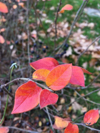 Leaf Beauty In Nature Autumn Autumn Colors Nature осень листья краски осени First Eyeem Photo
