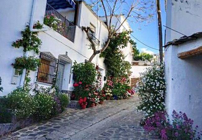 Andalucia Spain Andalucía Andaluciaviva Alpujarra Alpujarras EyeEm Best Shots Flowers, Nature And Beauty Eye4photography  Pueblo EyeEm Gallery Spain ✈️🇪🇸 House Casa