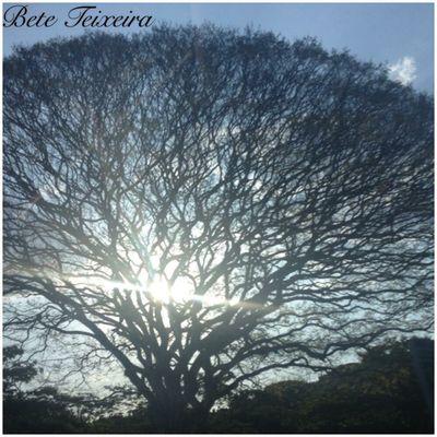 Entre galhos Tree Visual Creativity