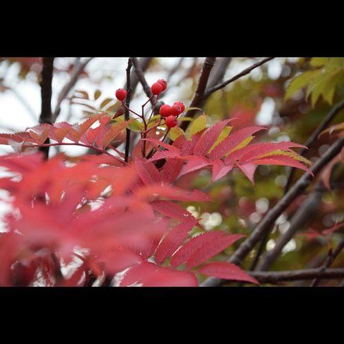 八甲田山 風景 紅葉
