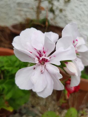 EyeEm Selects EyeEm Best Shots EyeEmNewHere EyeNatureLover Flower Head Flower Springtime Pink Color Petal Water Blossom Close-up Plant Flowering Plant In Bloom Magnolia Hibiscus Cherry Blossom Stamen