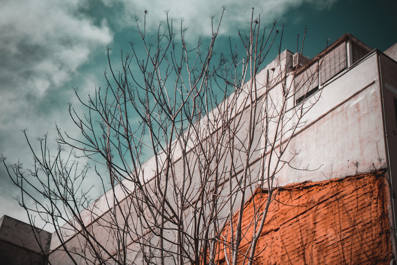 LOW ANGLE VIEW OF BARE TREE BY BUILDING AGAINST SKY