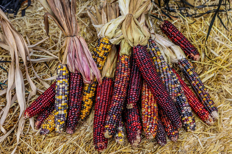 Dry corn background Autumn Halloween Agriculture Corn Corn - Crop Corn On The Cob Food High Angle View Market Multi Colored No People Outdoors Seasonal Still Life Vegetable