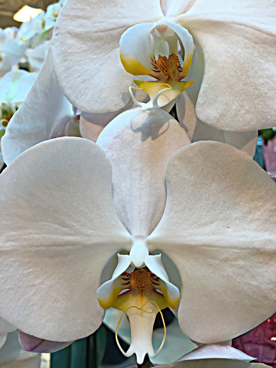 flower, petal, flower head, fragility, growth, nature, beauty in nature, plant, close-up, no people, pollen, stamen, freshness, leaf, day, blooming, orchid, outdoors, iris - plant