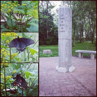 Peace and butterflies, y'all :) Sunnysunday Butterflies Springfieldmoparks