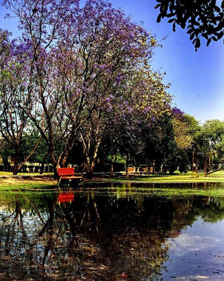 Sonipat Tree Reflection Water Nature Growth Beauty In Nature Lake Outdoors Waterfront Day No People Scenics Sky EyeEmNewHere EyeEm Best Shots EyeEm Love ♥ Peace