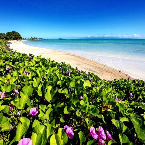 Flowers at the sand beach Samoa  Travel Destinations Resort Sea Beach Beauty In Nature Water Scenics Nature Clear Sky Tranquility Horizon Over Water Tranquil Scene Growth Blue Day Outdoors Idyllic Sand Green Color Sunlight No People Sky