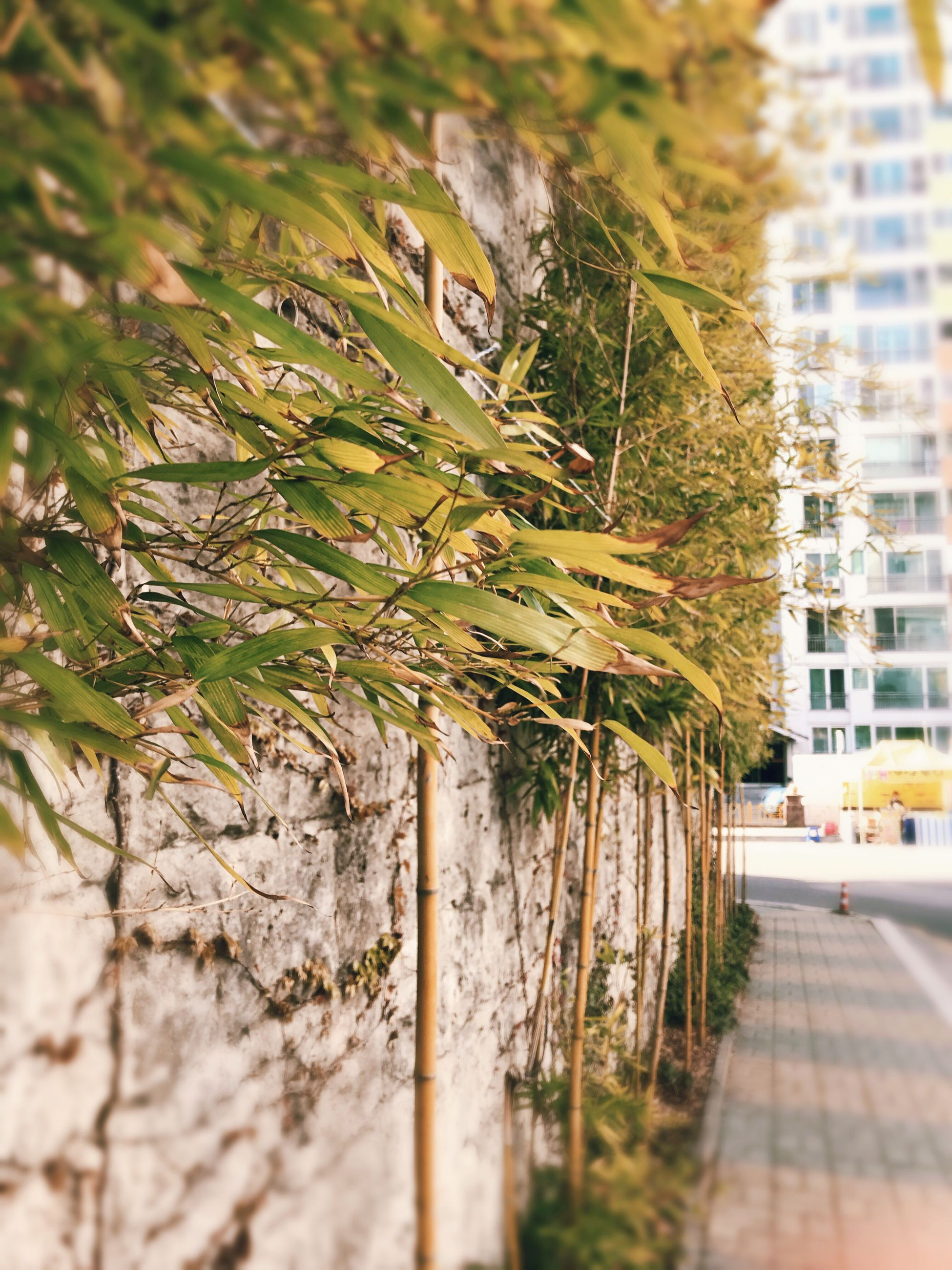 tree, growth, nature, outdoors, no people, plant, day, built structure, building exterior, beauty in nature, close-up, architecture, grass