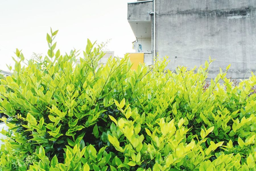 grass spring Green Color Growth Nature Freshness Agriculture Outdoors Day Plant No People Architecture Close-up Sky Nanxi River,Zhejiang