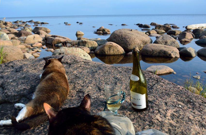 Water Sea Life Sea Beach Bird Sand Rock - Object Pebble Sea Lion Sky Pebble Beach Aquatic Mammal Animal Fin