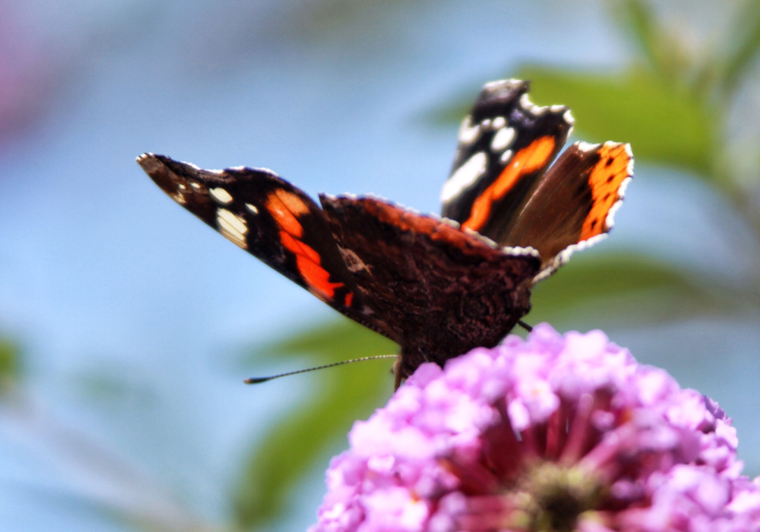 close-up, flower, focus on foreground, fragility, beauty in nature, nature, freshness, petal, season, selective focus, insect, growth, natural pattern, butterfly, day, butterfly - insect, dry, outdoors, flower head, change