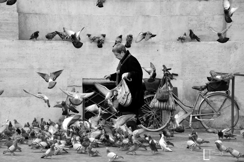 Roma Bike Birds Black And White Streetphotography