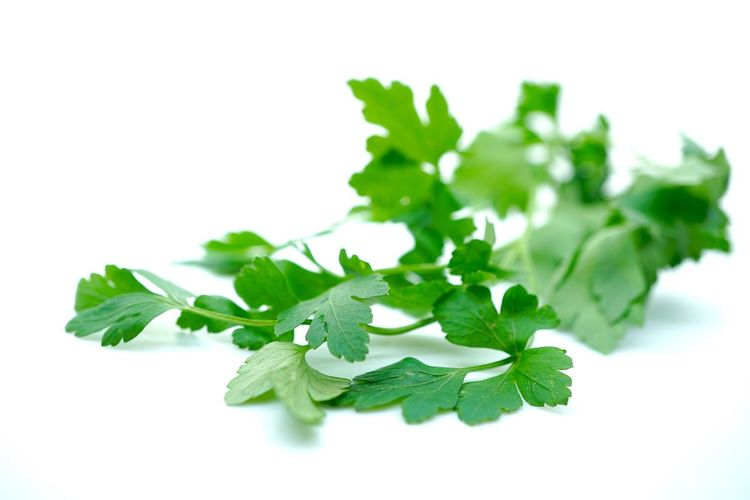 Parsley Herbal