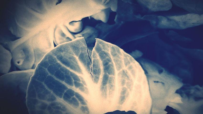 Légumes Feuilles Texture Gemüse Blatt Verdure Fogliame Verduras Hojas Textura Folhas Vegetable Leaf Pattern Macro Makro RemiB 060216