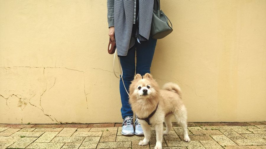 Low Section Of Woman Standing With Dog On Street