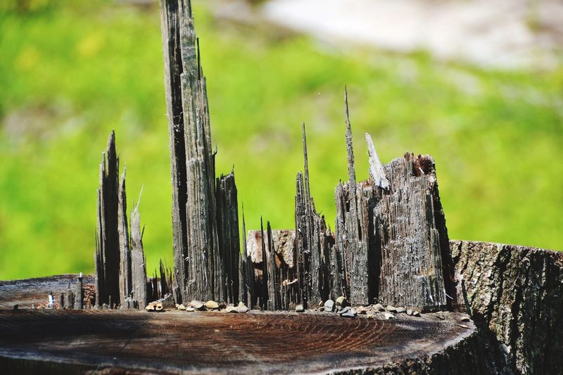 Miniture city of wooden spikes: Heritage Naturelovers Natural Cityscapes Surealism Artistic Nature Art Nature On Your Doorstep Urban Sculpture Sculpture Garden