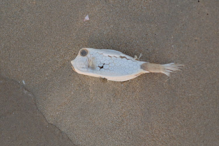High angle view of fish on beach