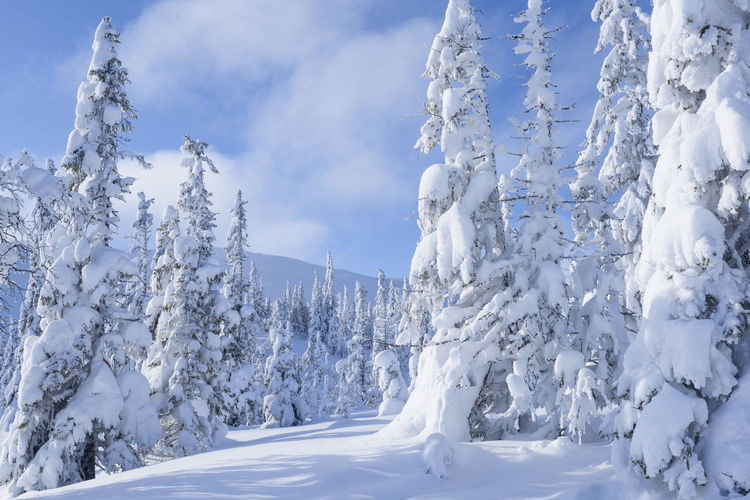 Snow covered trees on snowcapped mountain against sky
