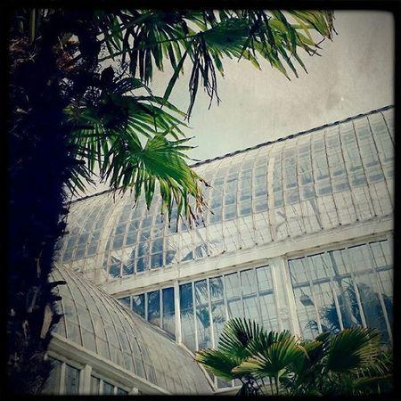 Gothenburg Green Palmhuset Gøteborg palms palmer greenhouse skye Sweeden lovelyDay holliday
