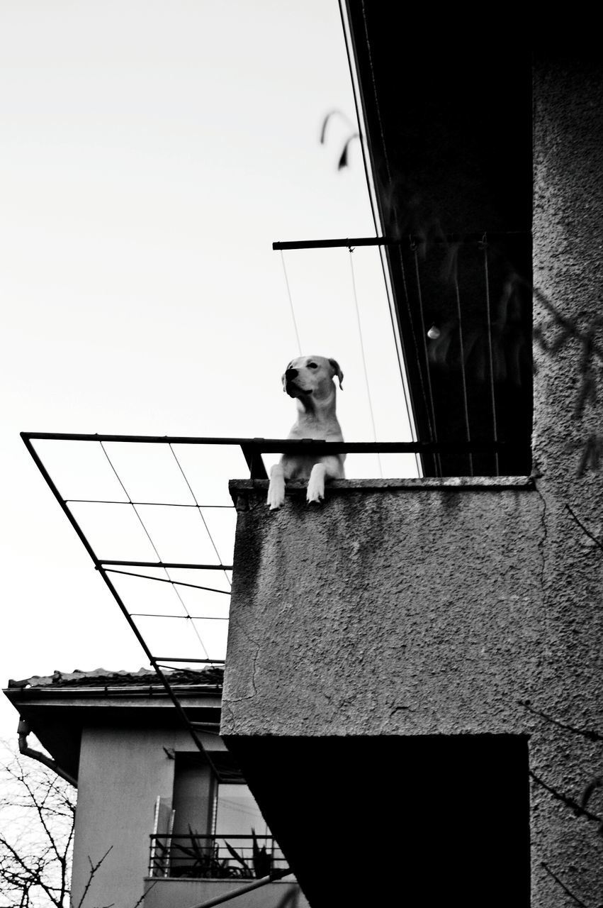 one animal, building exterior, animal themes, built structure, mammal, architecture, domestic animals, pets, low angle view, no people, outdoors, day, dog, sky