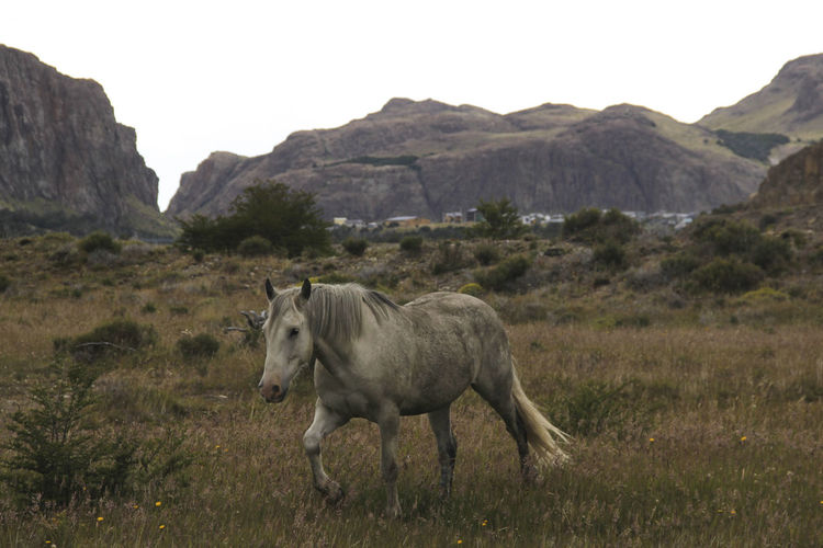 Horse Mountain Animal Themes Mammal Animal Environment Animal Wildlife Land Nature Domestic Animals Field Grass Livestock Sky Vertebrate Day No People One Animal Mountain Range Landscape Domestic Herbivorous Outdoors