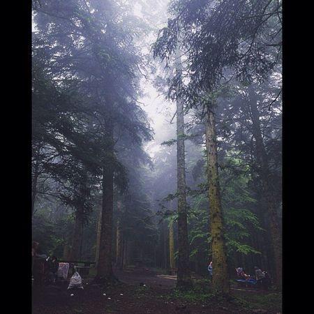 Wintertime Tree EyeEm Best Shots Sky Turkey EyeEm Best Edits First Eyeem Photo Freedom Cold Bolu Golcuk