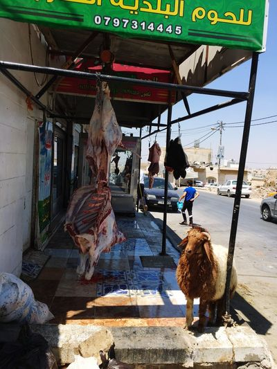 In-line at the Butcher Shop. Sacrifice Sheep Irony Butcher Shop Sunlight Day Building Exterior Architecture Built Structure Nature Text Street Outdoors