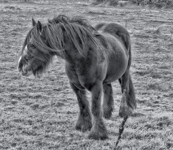 Hdr_Collection Blackandwhite Bw_collection Eye4photography