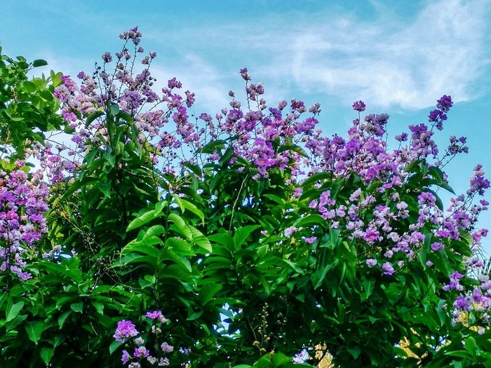 Flower Freshness Growth Plant Beauty In Nature Low Angle View Nature