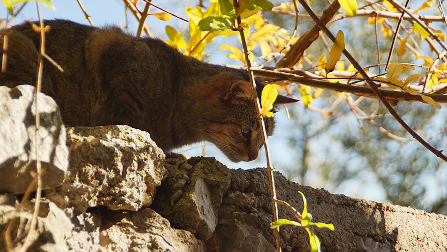 Low angle view of cat on surrounding wall