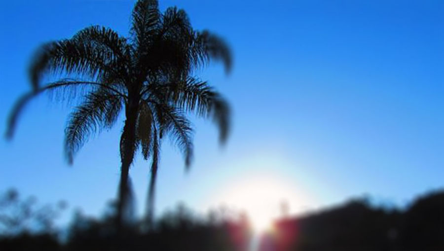 A Sunset with Blur Lens made by summer clear day. December 11th, 2015 Blue Brazil Coronel Fabriciano Day Minas Gerais Nature Outdoors Palm Tree Silhouette Sky Sun