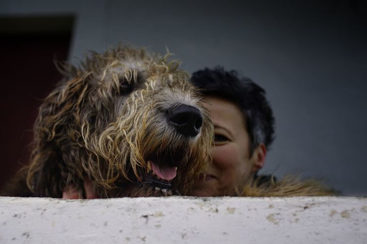 ... immer diese Fotogafiererei!!!.... One Animal Animal Body Part Close-up Dog Domestic Animals Human Body Part Fineart Human Face Capture The Moment Fine Art Photography Irish Wolfhound Willi The Wolfhound