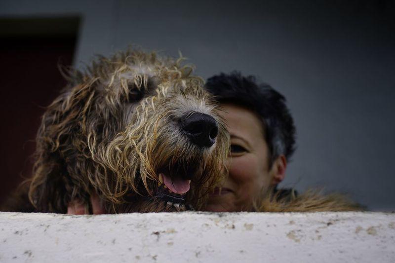 Close-up of woman with irish wolfhound
