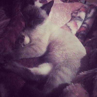 aaanw *-* vai mimi comigo hoje, me completa , amoorzinn da mamãe :) Instasono Cat Companheira Gordaa <3