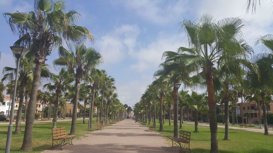 Park in sidi rahal ,morocco Palms Sidi Rahal Morocco Park Nature Landscape Trees View Tourism Natural Vacations Casablanca Square Tree City Tree Area Summer Sky Cloud - Sky Green Color Agricultural Field Tree Trunk Woods Palm Frond Branch Tree Canopy  Plant Bark Bare Tree