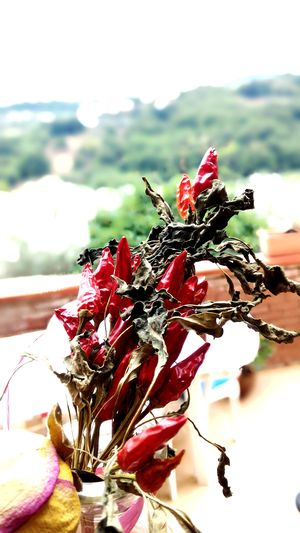 Peperoncino Redhotchilipeppers Calabria First Eyeem Photo
