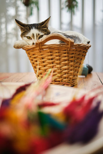 Cat sitting in basket at home