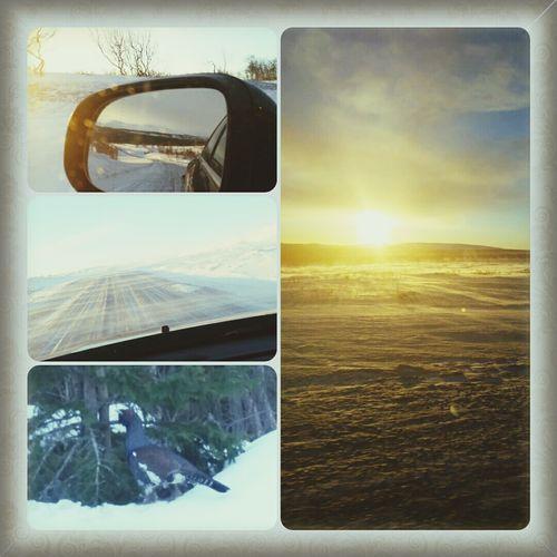 Flatruet Morning Big Bird :-) Sun 🐬