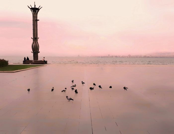 Pigeons Square Emptiness Reflection Pink Color EyeEm Gallery Eye4photography  Getting Inspired Light And Shadow Tadaa Community VSCO EyeEm Best Shots EyeEm Best Edits Izmir Silhouttes Minimalism Melancholy Loneliness Darkness And Light Empty Space Vscocam Summer Breathing Space