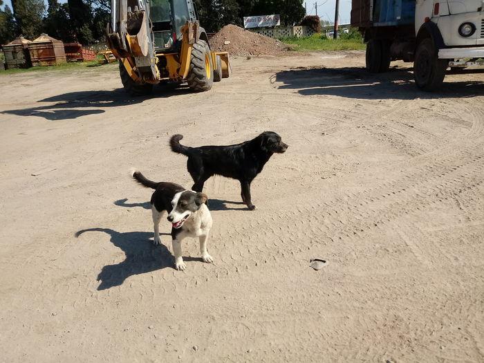 Pets Dog Shadow