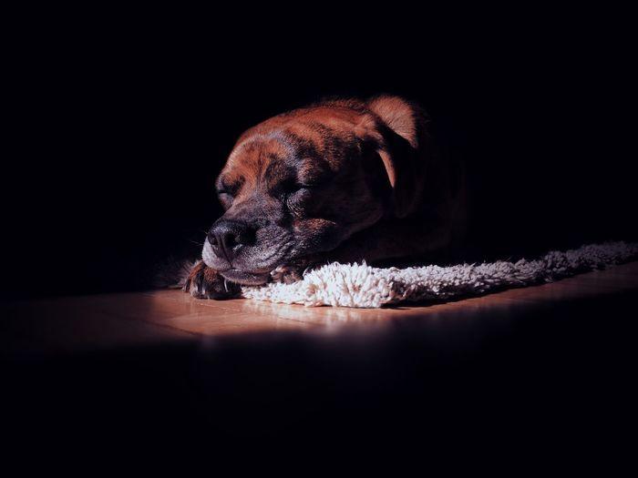 Close-Up Of Dog Sleeping On Rug In Darkroom