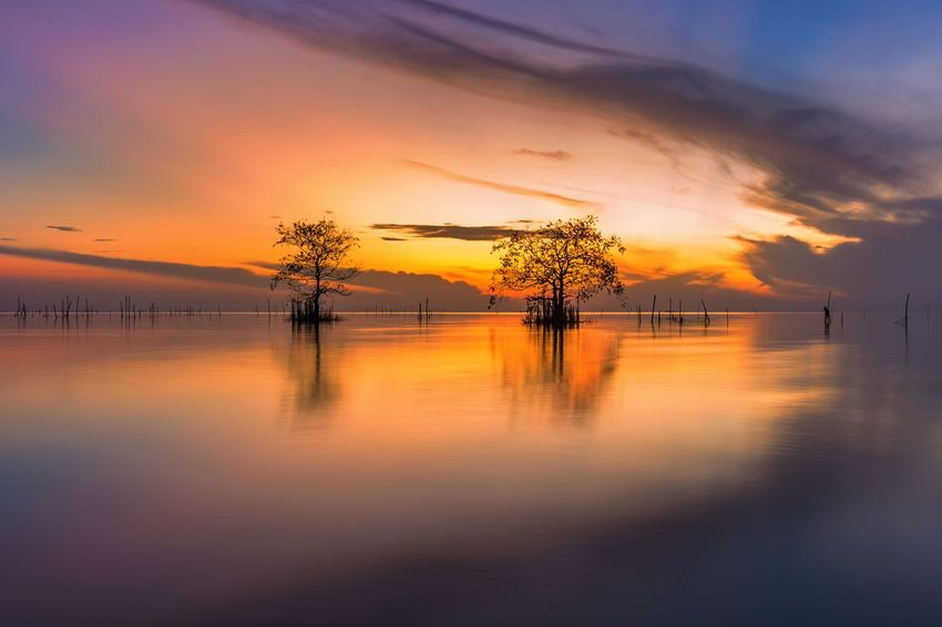 Two cork tree Cork Trees Sunrise Morning Sky Cloud - Sky Water Scenics - Nature Beauty In Nature Tranquility Tranquil Scene Orange Color Reflection Nature Idyllic No People Silhouette Tree Outdoors